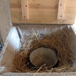 Nesting box (usually kept in the kitchen)