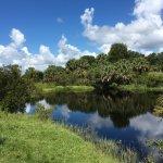 Photo de Captain Steve's Swamp Buggy Adventures