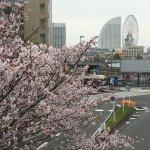 桜とMM21