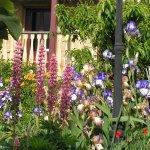 Spring brings abundant flowers to the garden