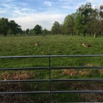 Sit by bushy park at La Fiamma, watching deers walk by