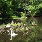 Swan Iris Lake