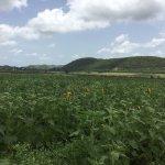 Photo of Finca los Girasoles