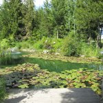 beautiful pond area and many flower pots make Log Inn a special Motel in Bonners Ferry