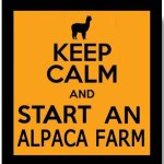 Alpacas are so much fun!