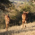 Karkloof Safari Spa Foto