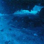 Photo de Travel Sub Dive Center