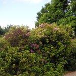 Bushes in the garden