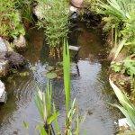 le petit plan d'eau