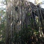Foto de Curtain Fig National Park