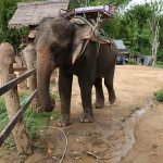 Saiyok Elephant Park