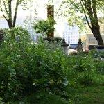 Wild garden and Lambeth Bridge