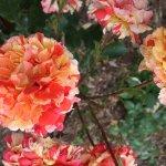 Roseraie du Thabor