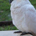 Kookaburra Motor Lodge Photo