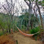 Hilltop hammock