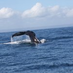 Photo of The Whales (Las Ballenas)