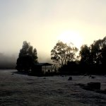 Loved waking up to a foggy icy morning