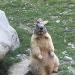 Oh, une marmotte ! :)
