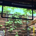 Amazing outdoor gym with grape vines growing overhead