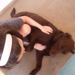 My daughter playing with Ben, the lazy chocolate lab