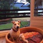 La chambre et le panier préparé pour notre petit chien Gluton