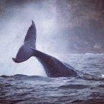 مشاهدة الدلافين والحيتان