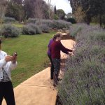 lavender walk in grounds