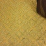 Quality Inn Richmond Airport Foto