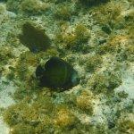 Splash Inn Dive Resort Foto