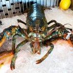 Lobster at the Fish market