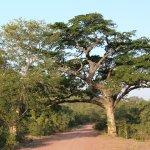 Punda Maria Restcamp Foto
