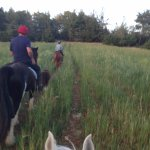 No cars, just nature and your horse