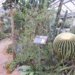 Botanischer Garten der Universität Foto