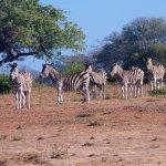 Foto di Idube Private Game Reserve Lodge