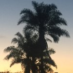 Sunset behind a palm tree from our balcony.