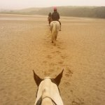Newquay horses_large.jpg