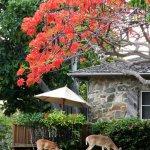 Caneel Bay Resort Foto