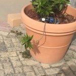 water bottle in planter 2 days