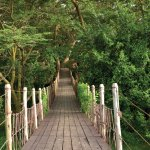 Basecamp Masai Mara Bridge