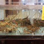 XinQiao Seafood