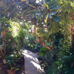 Garden at El Sol La Vida