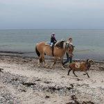 Ponyreiten am Meer mit Ziegen