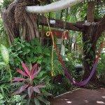 Foto de Eco-Hotel El Rey Del Caribe