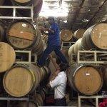 A Limo Excursion & Wine Tours Foto