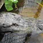 Foto de Billie Swamp Safari