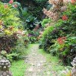 Pathway in Huntes Gardens