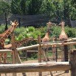 Снимок Safari West