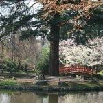 Le petit pont japonais