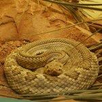 Foto di American International Rattlesnake Museum
