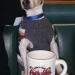 Floewr enjoying his coffee at the Potholder